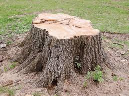 Tree Stump Grinding Near Me