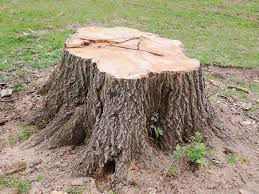 Tree Stump Removal Near Me